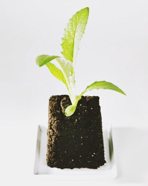 hướng dẫn trồng rau trong chậu